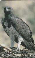 South Africa - Bird  - Martial Eagle - Afrique Du Sud