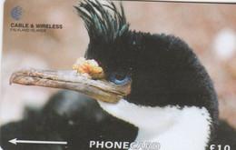 Falkland Islands - Bird  - King Cormorant - 229CFKA - Falklandeilanden