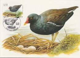 BUZIN. LA POULE D'EAU - 1985-.. Pájaros (Buzin)