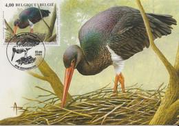 BUZIN. LA CIGOGNE NOIRE - 1985-.. Pájaros (Buzin)