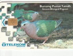 Malaysia - Bird - Burung Punai Tanah - Malaysia