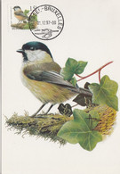 BUZIN. LA MESANGE BOREALE - 1985-.. Pájaros (Buzin)