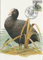 BUZIN. LE FOULQUE MACROULE - 1985-.. Pájaros (Buzin)