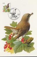 BUZIN. LE ROSSIGNOL PHILOMELE - 1985-.. Pájaros (Buzin)