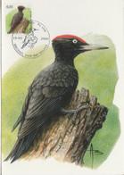 BUZIN. LE PIC NOIR - 1985-.. Pájaros (Buzin)