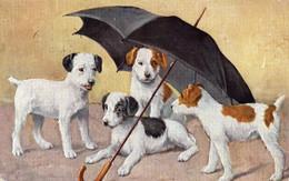 DC1331 - Schöne Motivkarte Hunde Mit Schirm - Perros