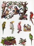 CHROMO 19ème Découpis Gaufrée Oiseaux Passereaux Perroquets Pigeons Colombe Nid Fleurs (24 Chromos) - Fleurs