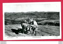"CPA (Réf : A982) ""THÈME AGRICULTURE  ATTELAGE "" PUICERDA - 100 Vista Panoramica - Teams"