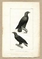 Antique Print Gravure Par Pauquet Histoire Buffon Biology Fauna Ornithology Bird Aigle Eagle - Prenten & Gravure