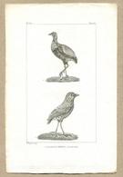 Antique Print Gravure Par Pauquet Histoire Buffon Biology Fauna Ornithology Bird Grand Béfroi Agami - Prenten & Gravure