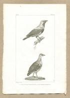 Antique Print Gravure Par Pauquet Histoire Buffon Biology Fauna Ornithology Bird Cotinga A Cordon Bleu Tinamou Magoua - Prenten & Gravure