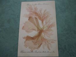 Fleurs De Mer-Porte Bonheur - Algues Naturelles Anglade - Belle Ile En Mer