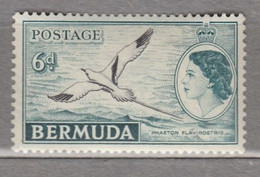 BERMUDA 1953 Elizabeth II Bird MH (*) Mi 138 #17010 - Bermuda