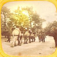 Photos Stéréo Stéréoscopiques Sur Carton (+/- 1900) - Paris Jardin D'acclimatation Eléphants Animée Colorisée(Voir ZOOM) - Stereoscopic