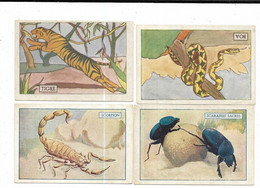 4 Chromos GGA Animaux De La Jungle Boa Et Tigre Et Les Insectes Scarabees Sacres Et Scorpion - Other