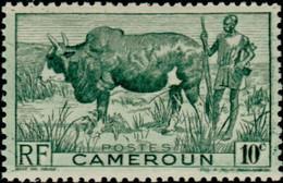 CAMEROUN - Zébu (Bos Primigenius Indicus), Gardien De Troupeau - Other
