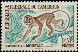 CAMEROUN - Guénon Moustachu (Cercopithecus Cephus) - Monkeys