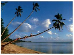 (EE 34) Cook Islands - Aitutaki - Amuri Beach Coconut Tree Climbing - Cook Islands