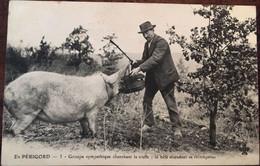 CPA, Folklore, En Périgord Groupe Sympathique Cherchant La Truffe; La Bête Attendant Sa Récompense, éd Trèfle CCCC N°3 - Non Classés