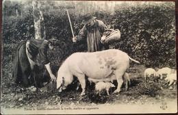 Cpa De 1915, Folklore EN PERIGORD TOUTE LA FAMILLE CHERCHANT LA TRUFFE, MAITRE ET APPRENTIS - COCHONS, éd  Tréfle Collas - Non Classés