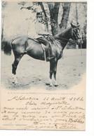 L130b512 - El Rey Don Alphonso XIII Paseando Por La Casa De Campo - Coll. Canovas -  Carte Précurseur - Royal Families