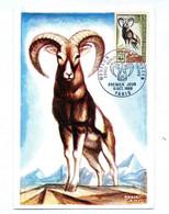 Carte Maximum 1969 Paris Mouflon - 1960-69