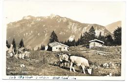 8213  ELANDALM BEI ASCHAU    ~ 1950 - Sonstige