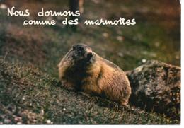 NOUS DORMONS COMME DES MARMOTTES - Humor