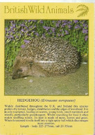 England & Circulated, British Wild Animals, Hedgehog, Erinaceus Uropaeus, Hayes (25573) - Andere