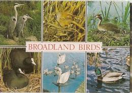 England & Circulated,Broadland Birds, Norwich  To Skipton 2006 (6876) - Vogels