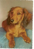 England & Circulated, Dog, London To Diss 1957 (07978) - Honden