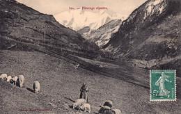 CPA 04 - VALLÉE DE L'UBAYE - Pâturage Alpestre - COCHE N° 302 - Éditeur à Barcelonnette - Sin Clasificación