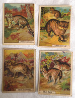 Lot 4 Images Chromo Thème CHAT Pharmacie De France Lille Librairie D'Education Nationale Tisane Pères Celestins - Other
