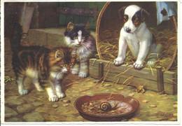 CHAT - Chats - Chien - Observant Un Escargot - Katzen
