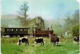 Masevaux - Le Petit Train De La Vallée De La Doller Au Pied Du Ringelstein, à L'entrée De La Gare De Masevaux - Vaches - Masevaux
