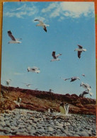 Carte AMORA 1957 - PROSPECTION SUD AFRICAINE - Zanzibar - Reclame