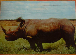 Carte AMORA 1957 - PROSPECTION SUD AFRICAINE - Kenya - Reclame