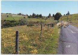 CPM 48 PRINSUEJOLS ... Route D'Usanges (Livenais 0620) Troupeau - Andere Gemeenten