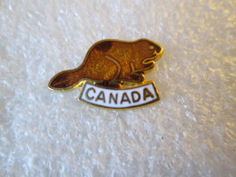 PIN'S    ANIMAUX    CASTOR   CANADA   Email Grand Feu - Animali