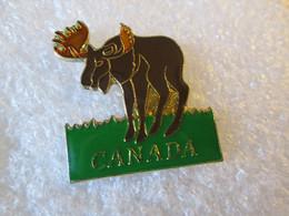 PIN'S    ANIMAUX    ELAN   CANADA - Animali
