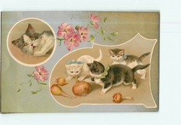Carte Illustrateur - Chats Et Les Oignons - CHAT -  2 Scans - Cats