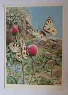 """""""Blumen,Schmetterling, Alpen-Apollofalter"""" 1945 ♥  - Other"""