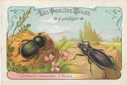 CHROMO Descriptive - Les Insectes Utiles à Protéger - Geotrupe - Blaps - Other