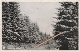 Libramont: Les Bois Sous La Neige, 2 Items - Libramont-Chevigny