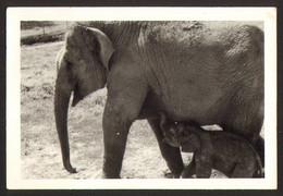 Animal Elephant Old Photo 9x6 Cm #24474 - Sonstige