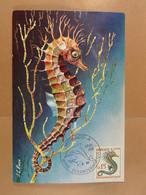 Monaco Cinquantenaire Du Musée 1910-1960  Hippocampe - Maximumkarten (MC)