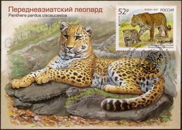 2021-2722 Maximum Card Canc Rostov-na-Donu Russia EUROPA CEPT National Endangered Wildlife.Fauna:Big Cats: Leopard - Cartoline Maximum
