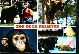 ► Singe Monkey  Zoo De La Palmyre Royan   Monsieur Caillé Et Nathalie - Monos