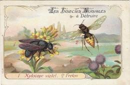 CHROMO Descriptive - Les Insectes Nuisibes à Détruire - Xylocope Violet - Frelon - Other