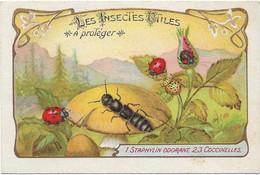 CHROMO Descriptive - Les Insectes Utiles à Protéger - Staphylin Odorant Coccinelles - Other
